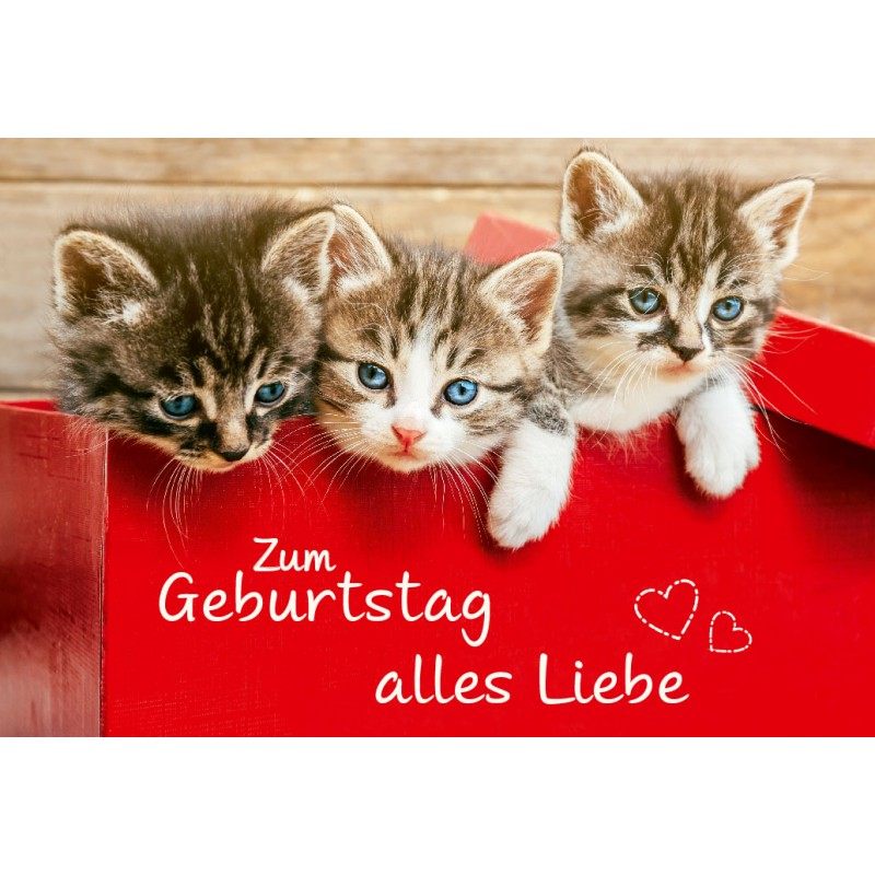 Herzlichen Gluckwunsch Zum Geburtstag Katzen Hylen Maddawards Com